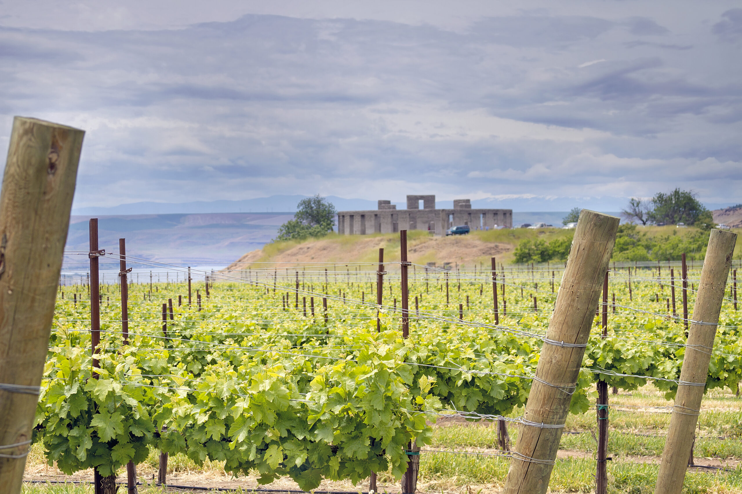 vineyard in maryhill washington with stonehenge visible in the distance