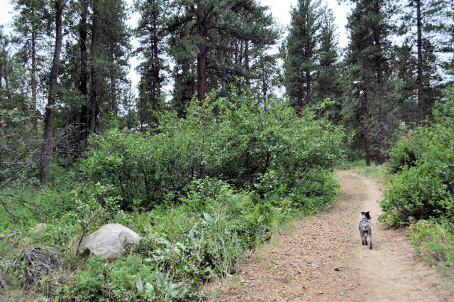 Staeekhwa Trail Dog-friendly