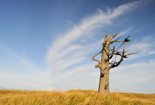 Clark's Tree