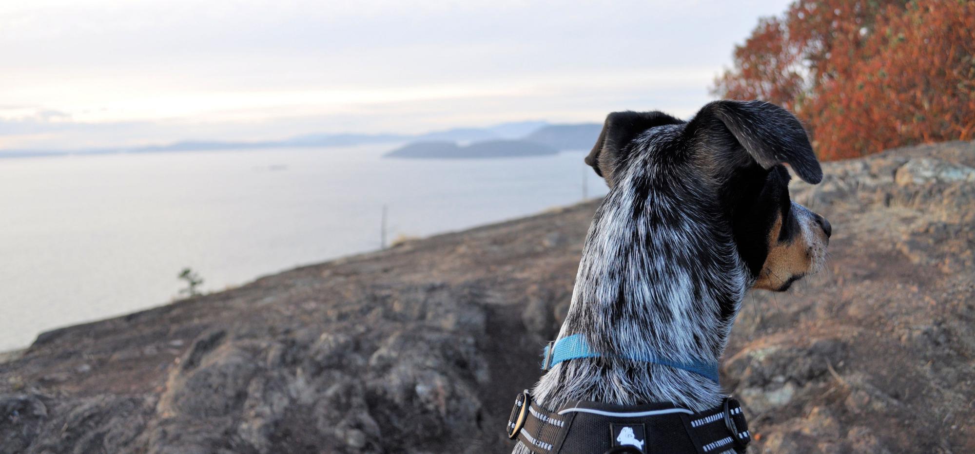 Dog-friendly hikes in Anacortes, WA.