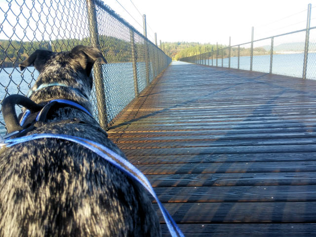 Walking your dog outside in winter in Anacortes, Washington.