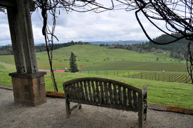 View from the patio at Iris Vineyards in Oregon.