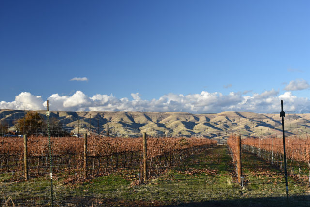 View from Clearwater Canyon Cellars of their vineyards.