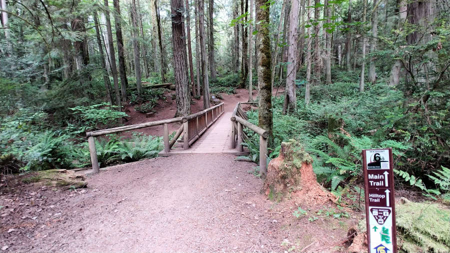 The Grand Forest on Bainbridge Island.