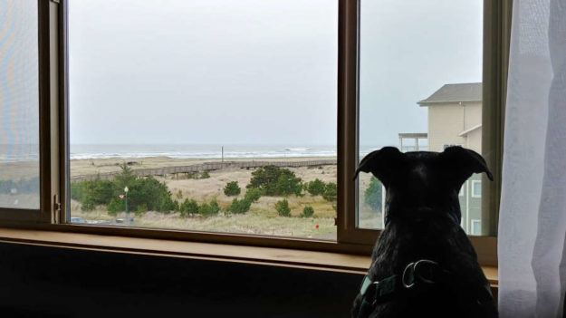 Dog at Adrift Hotel + Spa in Long Beach, Washington.