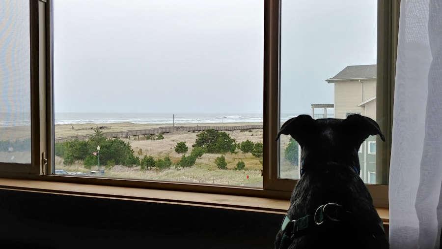 Dog at Adrift Hotel + Spa in Long Beach, Washington.