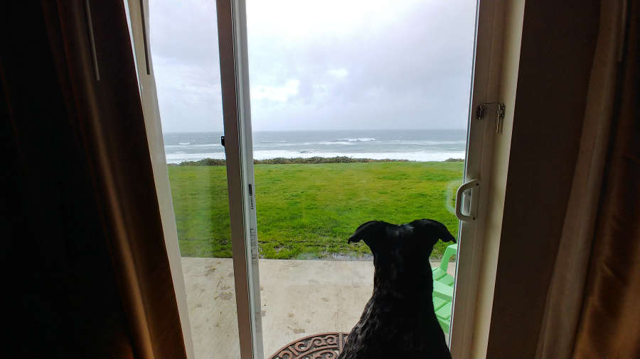Dog staring at the window at the beach.