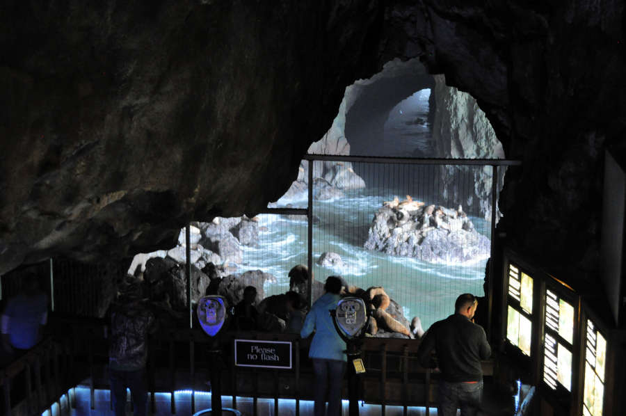 Viewing area in the Sea Lion Caves.