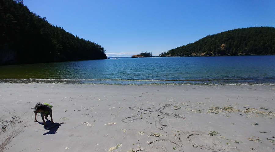 A sandy beach at Bowman Bay.