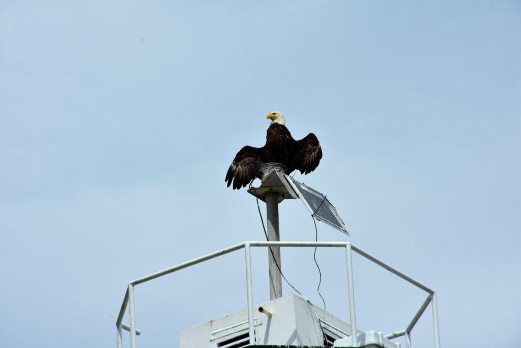 An eagle atop Cattle Point Lighthouse on San Juan Island.