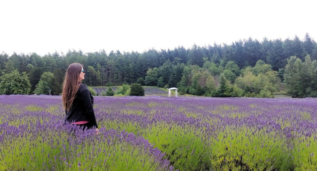 Pelindaba Lavender Farm on San Juan Island.