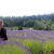 A woman standing in a lavender field at Pelindaba Lavender Farm.