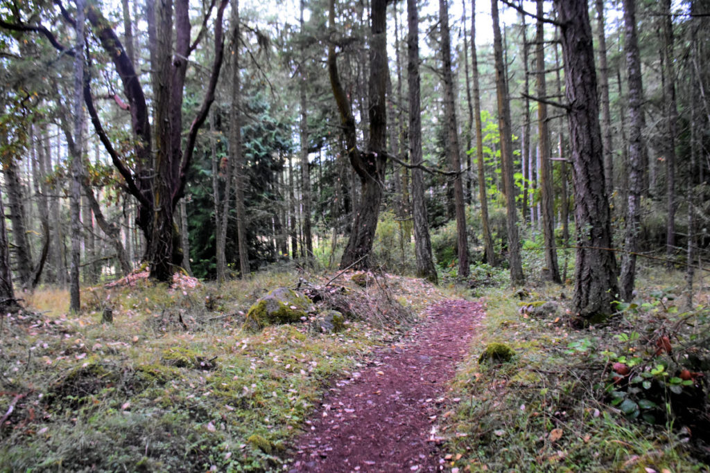 Trail to the mausoleum on San Juan Island.