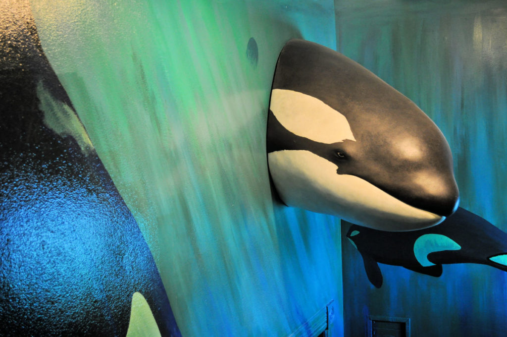 Orca whale at The Whale Museum in Friday Harbor.