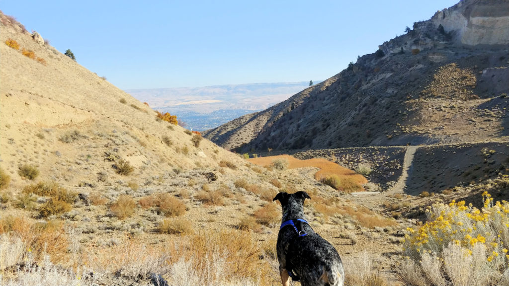 A dog at Dry Gulch Preserve.