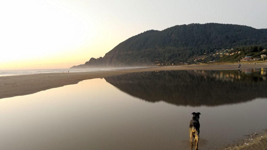 Hazel at Manzanita Beach at sunset.