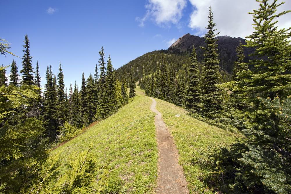 A grassy ridge hiking trail in Olympic National Park with pines on each side with the trail leading up to the summit on a partly cloudy sky day.
