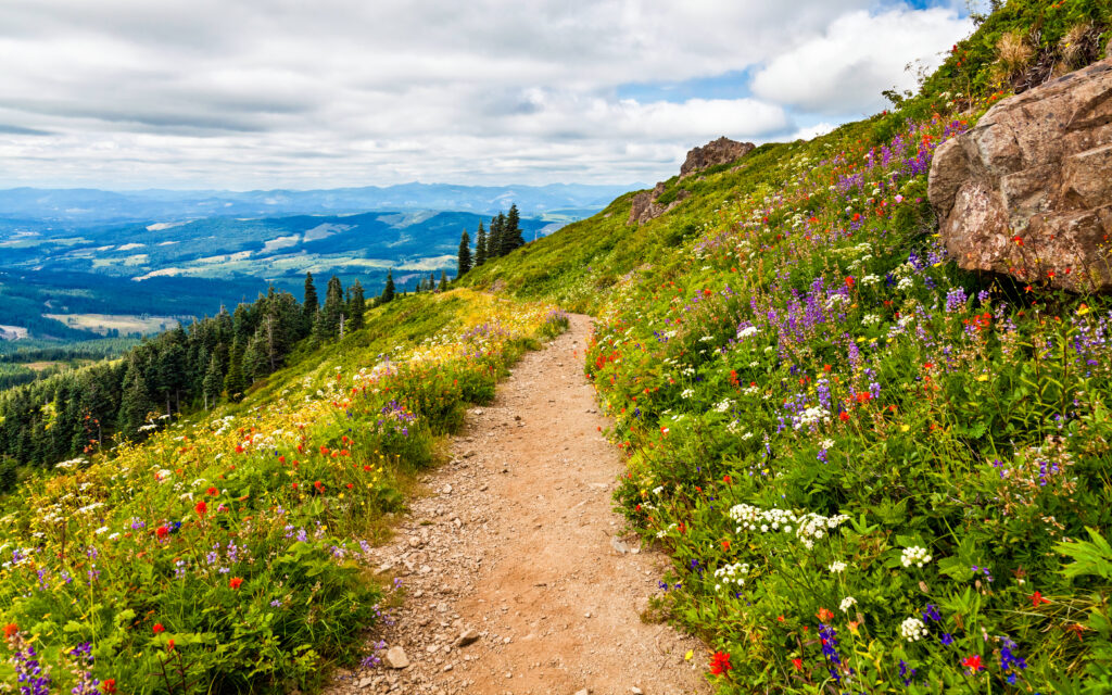 hiking trails in washington lined with wildflowers in the spring. a path runs down the center of the photo