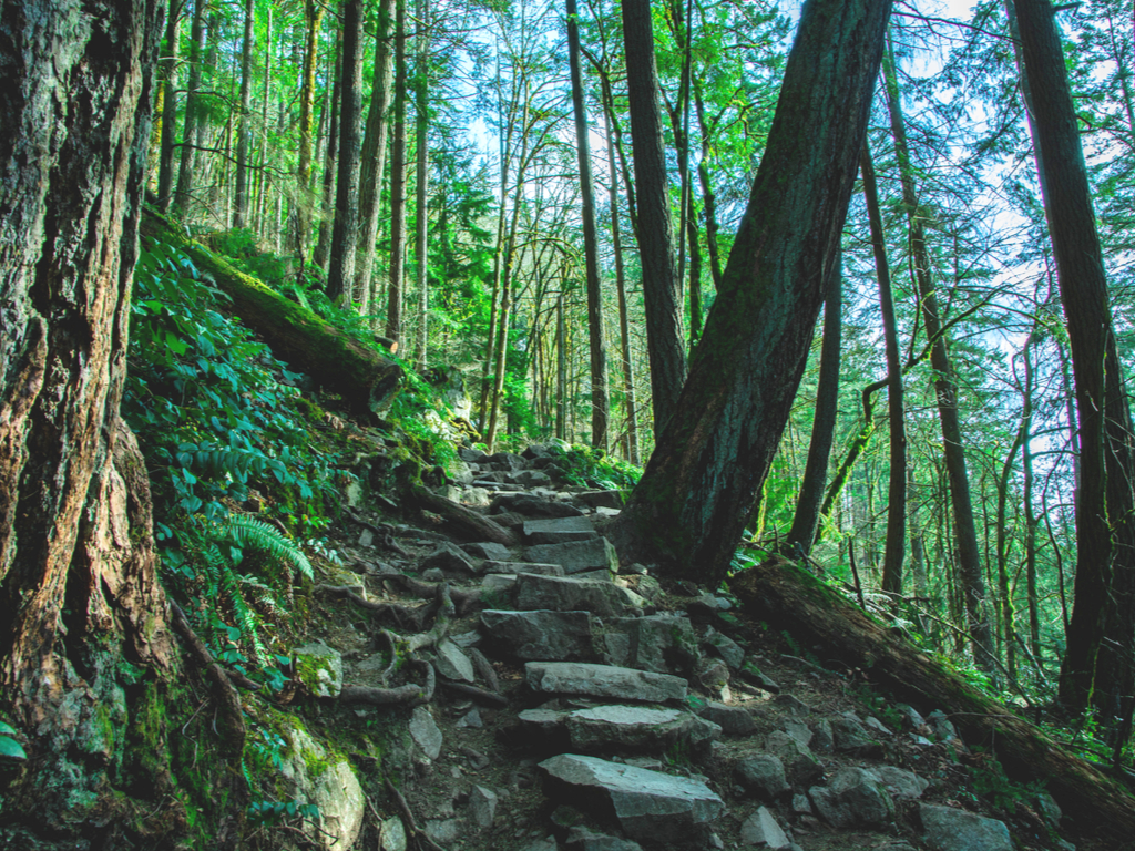 forested hiking trail near seattle with a stone staircase in the center
