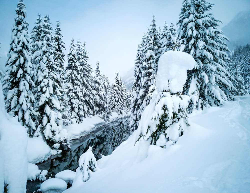 A snowy trail with lots of snow-covered evergreen trees and a still creek that has not yet frozen over on a cloudy day on a winter hike in Washington State.