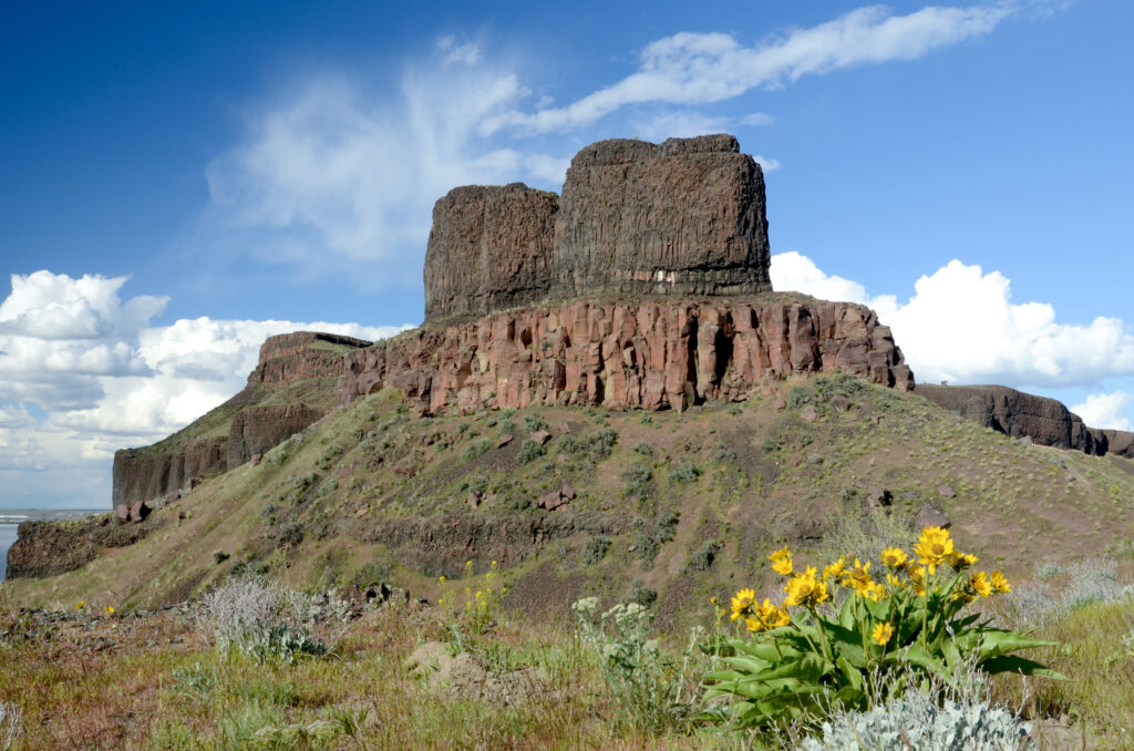 view of twin sisters rock with a patch of yellow flowers in the foreground