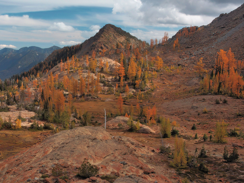 Bright orangey-yellow larch trees on the trail to Lake Ingalls with reddish soil and mountain peaks in the distances on this popular fall Washington hike.