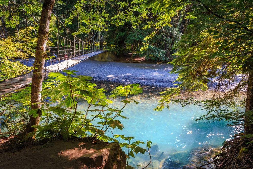 A suspension bridge going over a brilliant turquoise glacial river on a popular hike in Mt Rainier National Park, Grove of the Patriarchs