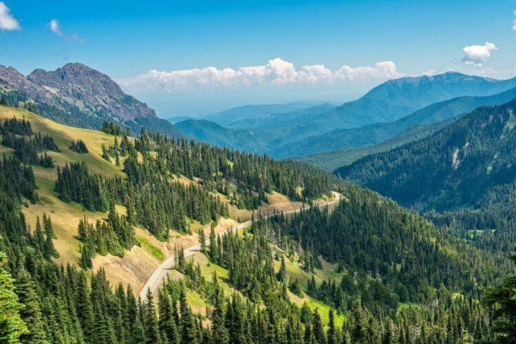 View point from up on a hill with tons of evergreen trees below and a road twisting through the mountains of Olympic National Park.