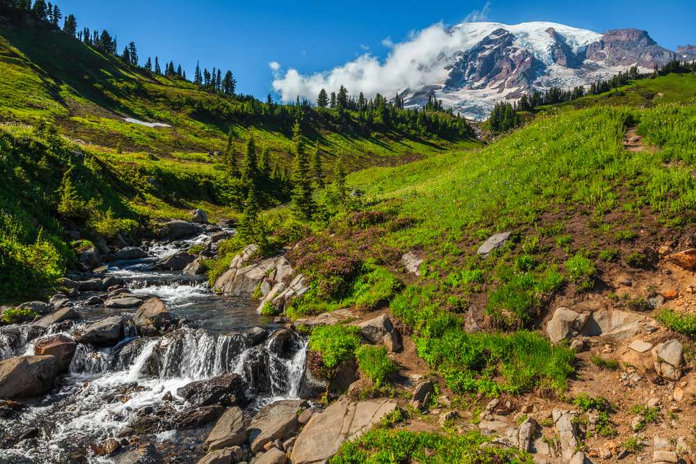 A small creek cascading down the hillside with rocks and grass, with a view of Mount Rainier in the distant background covered in snow and clouds