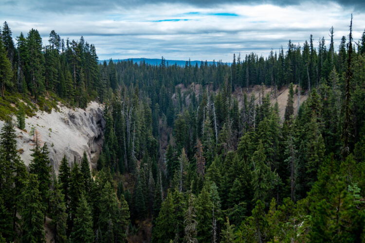 overview of evergreen trees in annie creek canyon