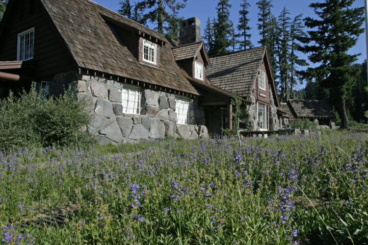 Purple springtime flowers in front of the Crater Lake Visitor Center, a stone and wood-tiled roof building in the forest.