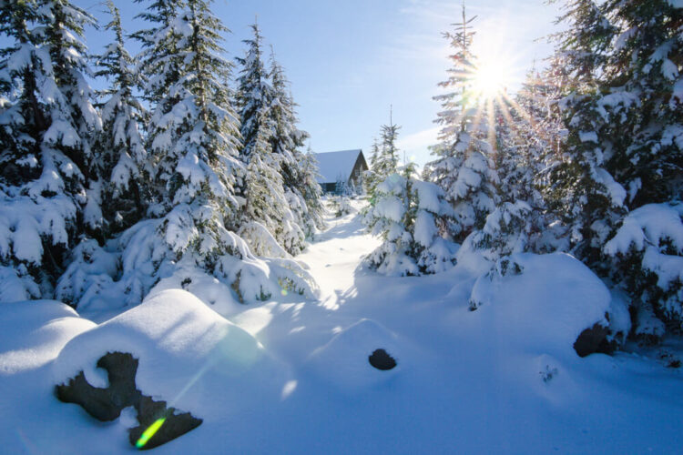 Forest and a small wooden log cabin after heavy fresh snowfall near Crater Lake Oregon in winter, on a sunny day after the snow