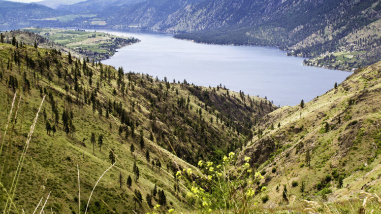 View over Lake Chelan from above, with grass-covered hills and trees and a small bunch of yellow wildflowers in the foreground.