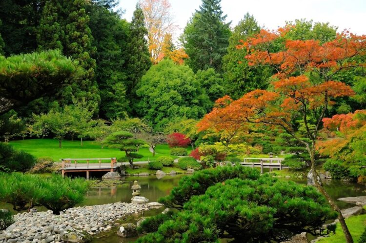 Brilliant green and orange foliage and plant life in the autumn in a Japanese-inspired garden in Seattle.