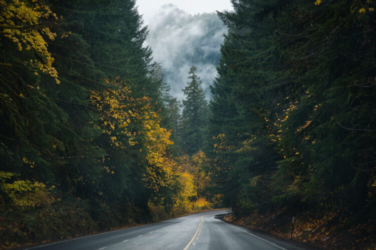 moody light on an oregon road trip through a forest with some fall foliage