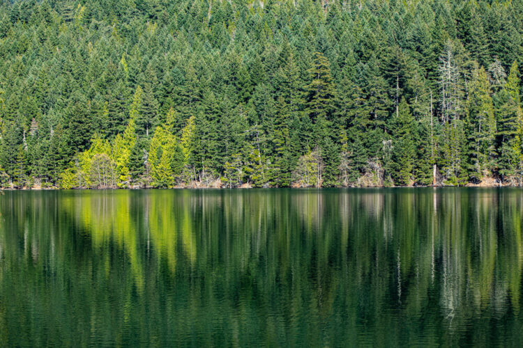 Blueish green water of the lake reflecting the green trees on the edge of the lake with a ripple effect