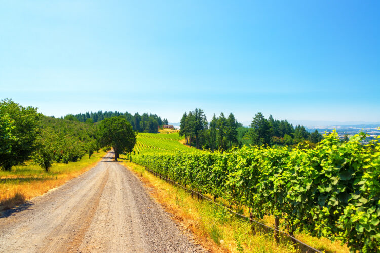 dirt road running through a vineyard in mcminniville, one of the best oregon small towns
