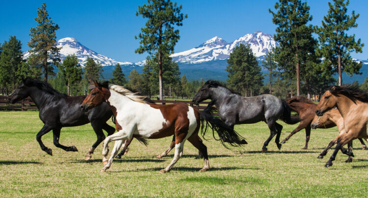 galloping horses in front of three sisters mountain peaks oregon