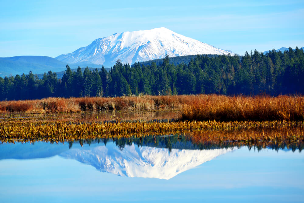 The snow-covered top of Mt St Helens reflecting below into Silver Lake, surrounded by brownish grass and pine trees