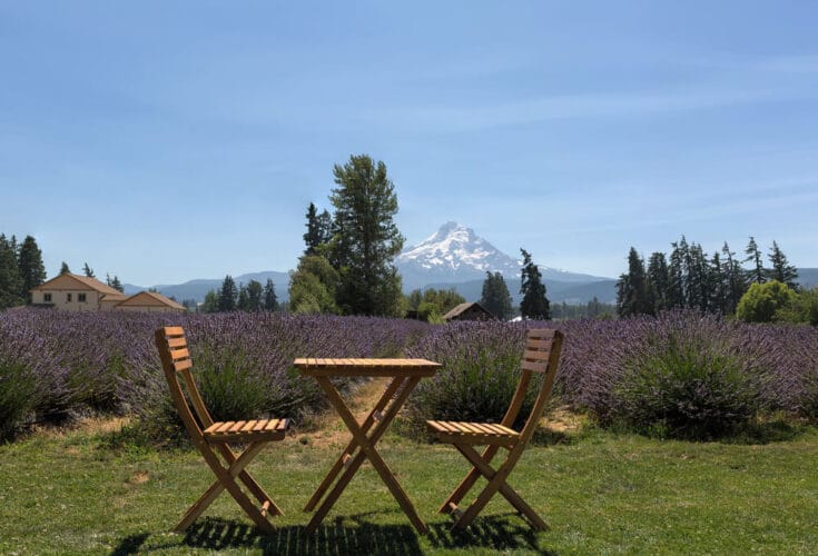 Lavender fields in Hood River with two chairs and a small table in front of the lavender fields with amountain in the distance.