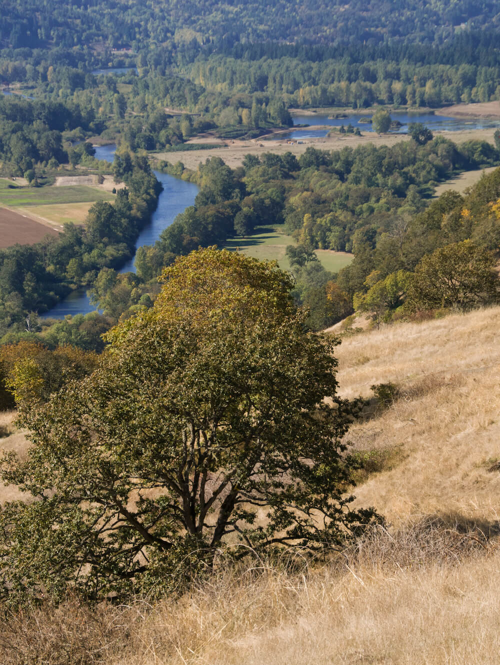 Dry grasslands overlooking a river with lots of green trees in Mt Pisgah