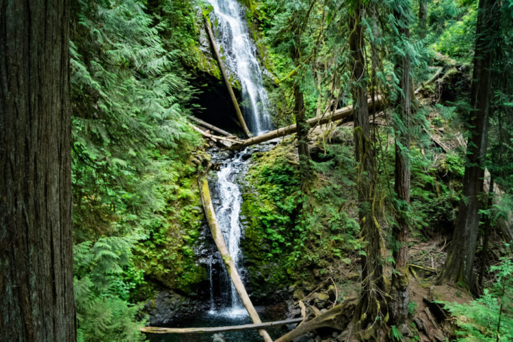 Two tiers of a waterfall in Olympic National Park, amidst beautiful greenery, moss, and trees.