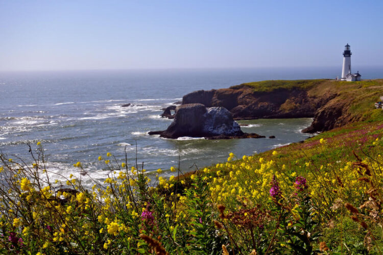 White lighthouse in the distance on a cliff edge with yellow and pink flowers on the Oregon Coast, visiting Newport on a Portland road trip