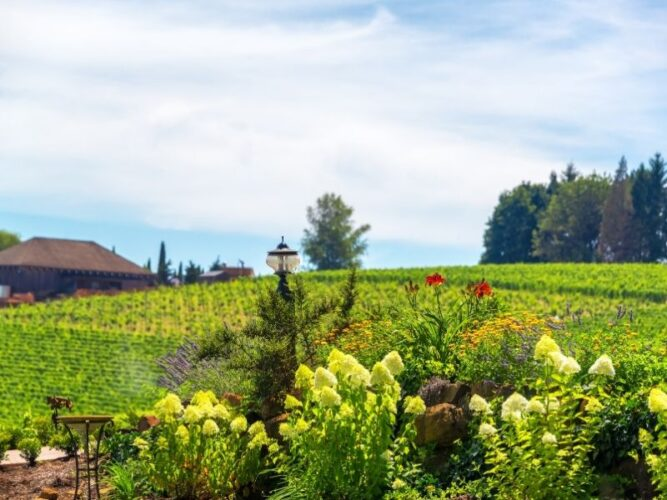 flowers and plant life in oregon. wine country in a vineyard