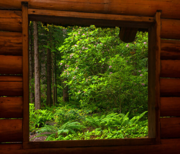 window of a cabin showing ferns and forest life