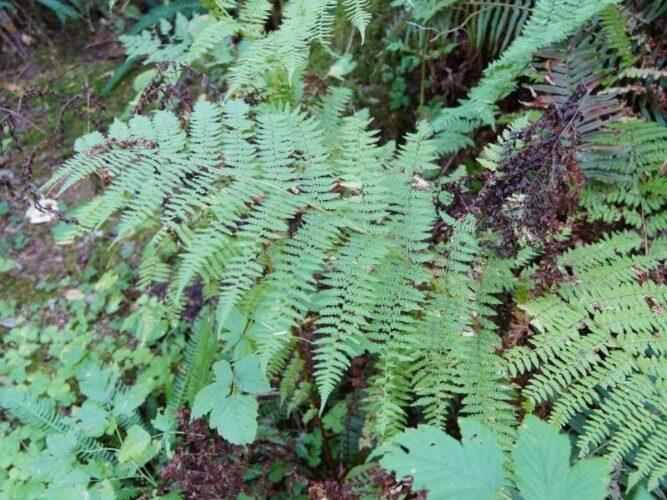 ferns along a trail near portland