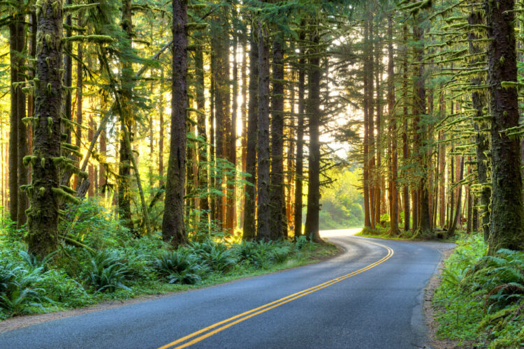 Road heading through the Olympic Peninsula on a beautiful and scenic Washington road trip